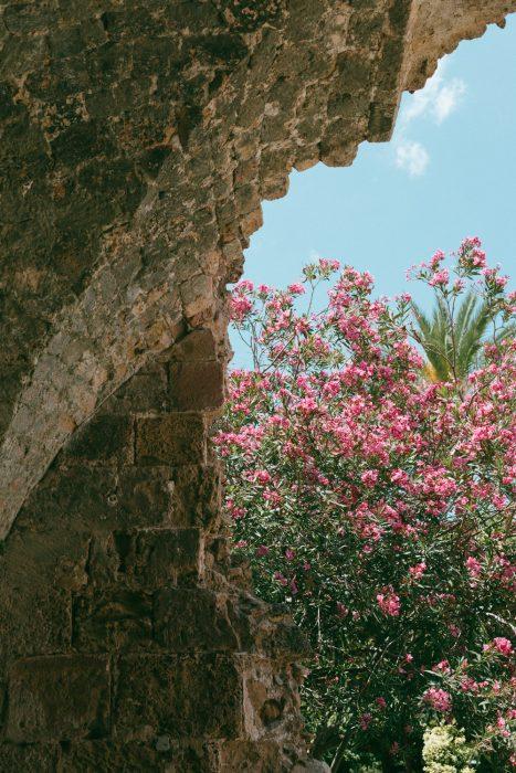 Cyprus-Kortaben-0724